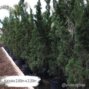 Kaizuka 2,00m a 2,20m