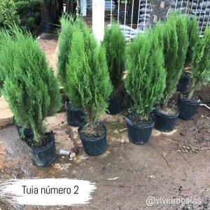 tuina n 2